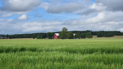 NLR Ost Arnes Vormsund Landskap 7982