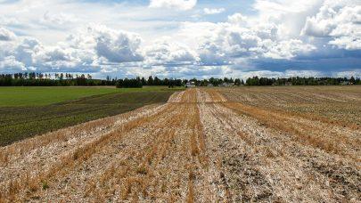 Jordarbeidingsfelt