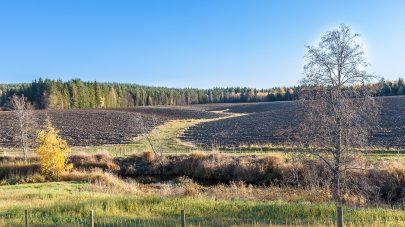 Grasdekt vannvei ploye aasmund