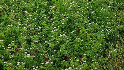 Brlomsterstripe Osaker aug 2020 oversikt