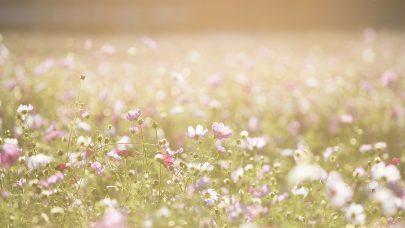Sommer blomster pexels pixabay 262713