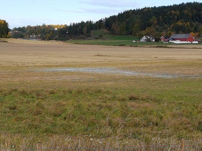 Vann som står på jordet. Foto: Inga Holt.